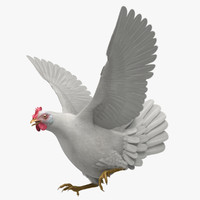 3d model of gallus domesticus white domestic
