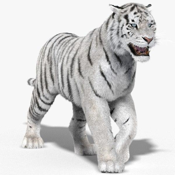 tiger white fur animation 3d model