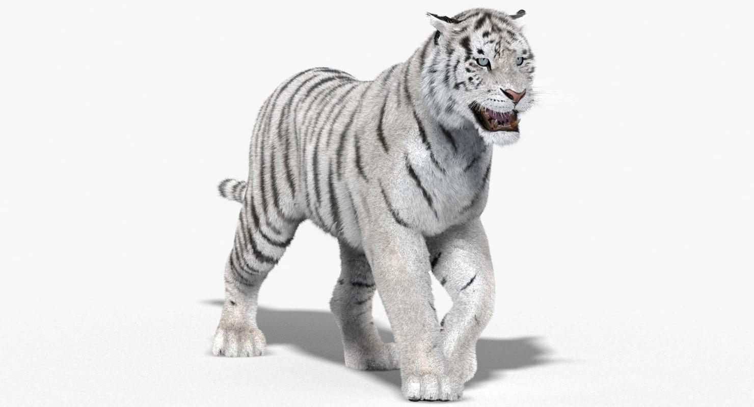 Картинки белого тигра анимация, бумаги