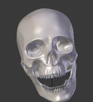 skull (high detail)