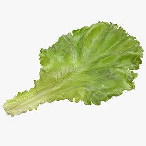 lettuce leaf 3d model