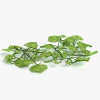 3d cucumber plant model