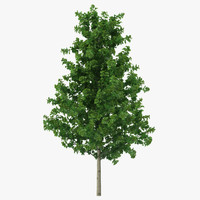 young yellow poplar tree 3ds