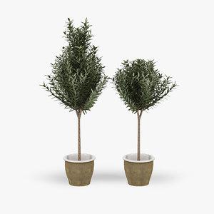 3d model olive trees pots