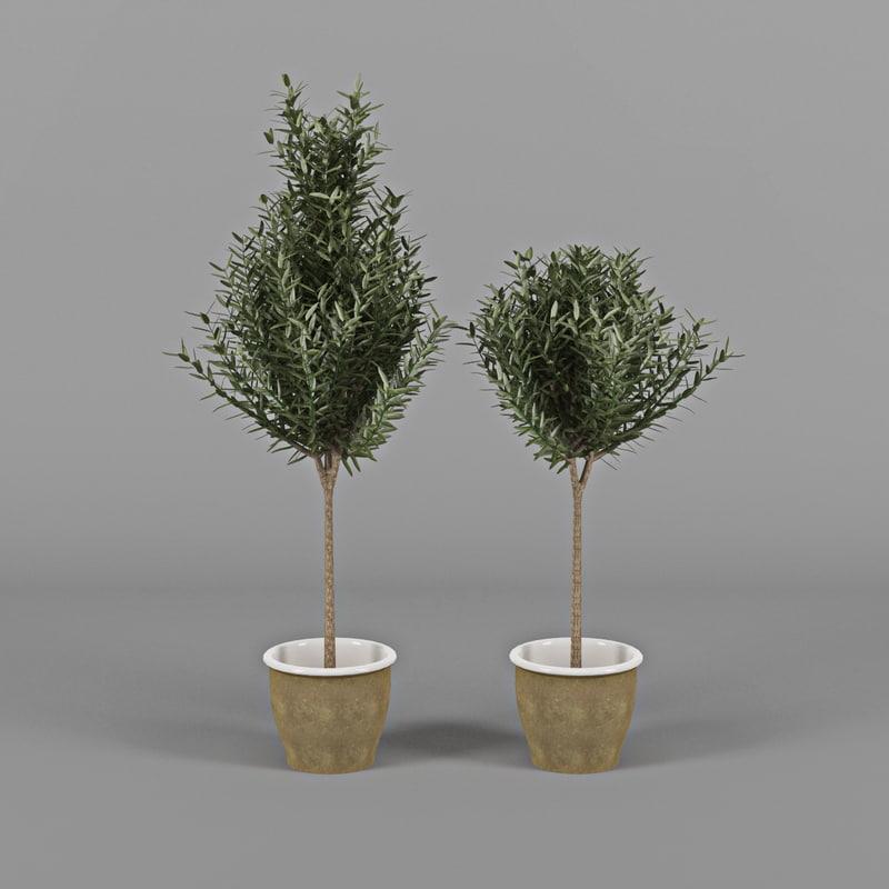 3d model olive trees pots. Black Bedroom Furniture Sets. Home Design Ideas
