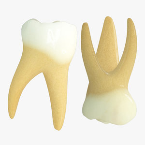 primary molars max