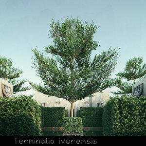 3d 6 tree