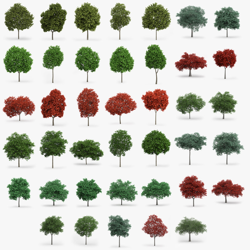 3d maple oak model