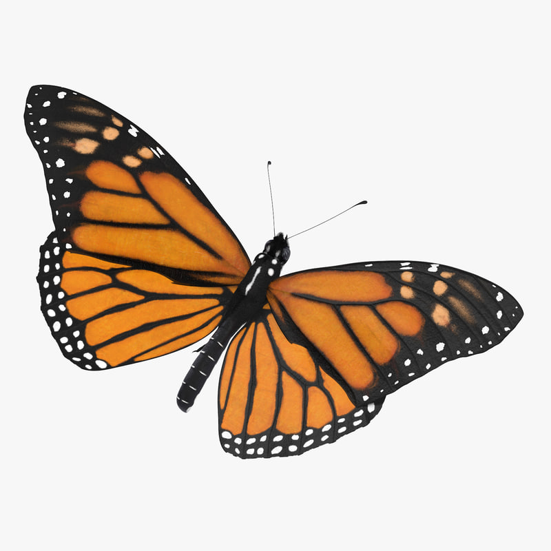 monarch butterfly standing v2 3d max