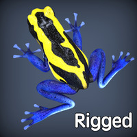 3d model realistic poison frog rigged