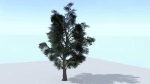 sycamore tree x