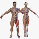 Ultimate Complete Male/Female Anatomy Combo