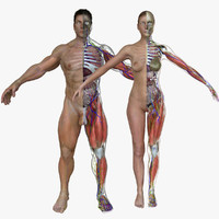 Ultimate Complete Male/Female Anatomy Combo