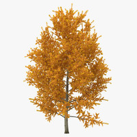 3d model yellow poplar tree autumn
