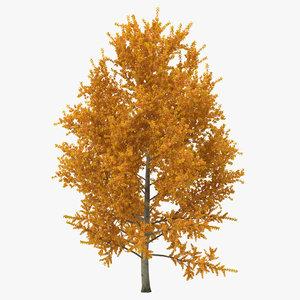 3d yellow poplar tree autumn model