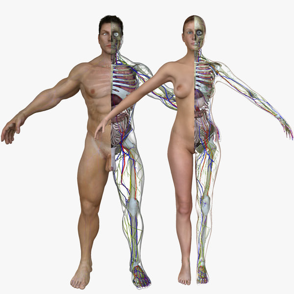 3d male female body anatomy
