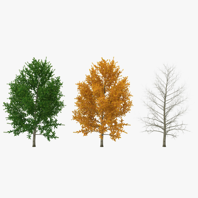 3ds yellow poplar tree modeled