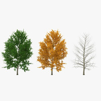 3d model of yellow poplar tree set