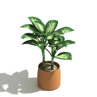 Dumb Cane low poly indoor plant