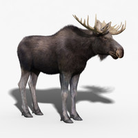 Moose(FUR)
