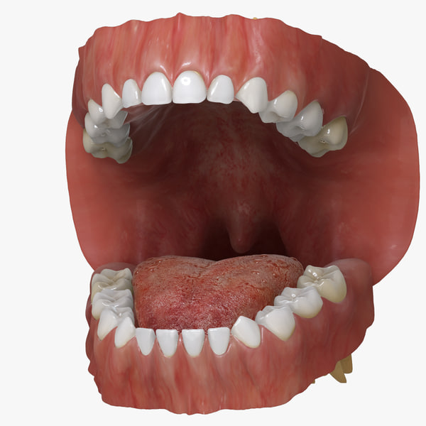 3ds max mixed dentition mouth tongue