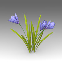 crocus flowers 3d fbx