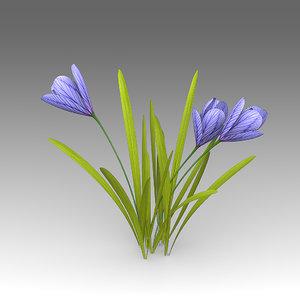 crocus flowers 3d fbx