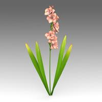 gladiolus flowers 3d model