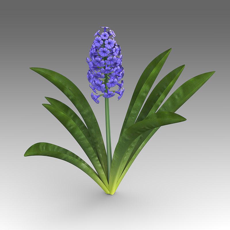 hyacinthus flowers fbx