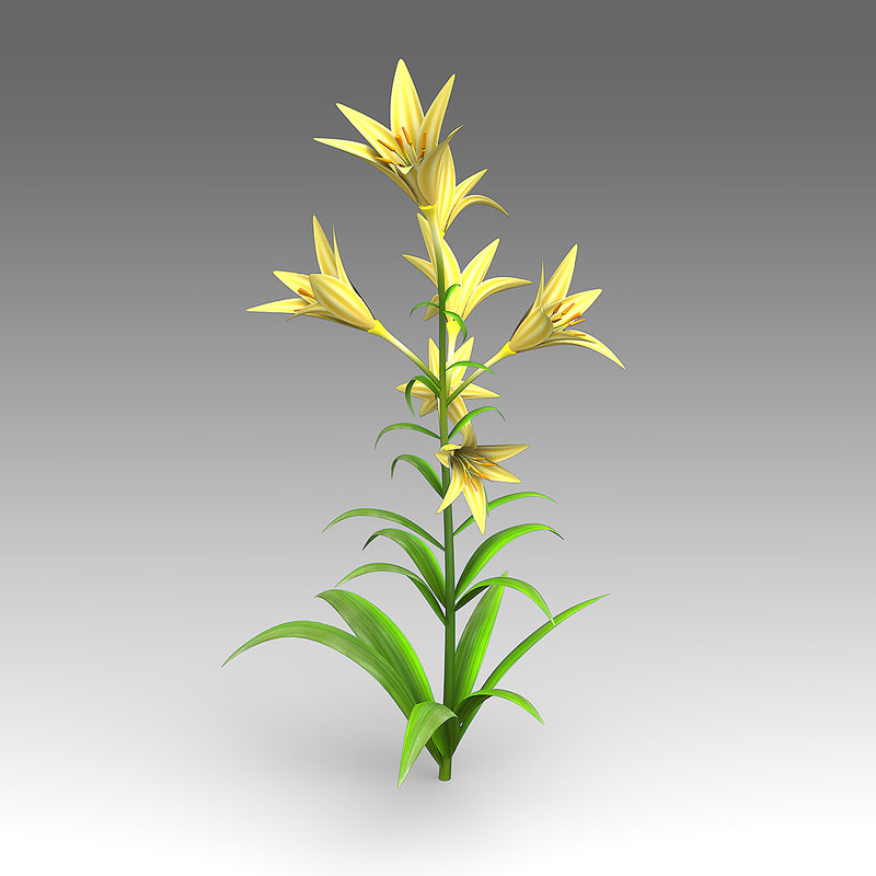 3d lily flower model
