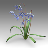 scilla flower 3d x