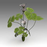 x oxalis acetosella flower