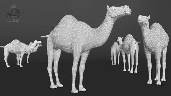 3d dromedary camel model