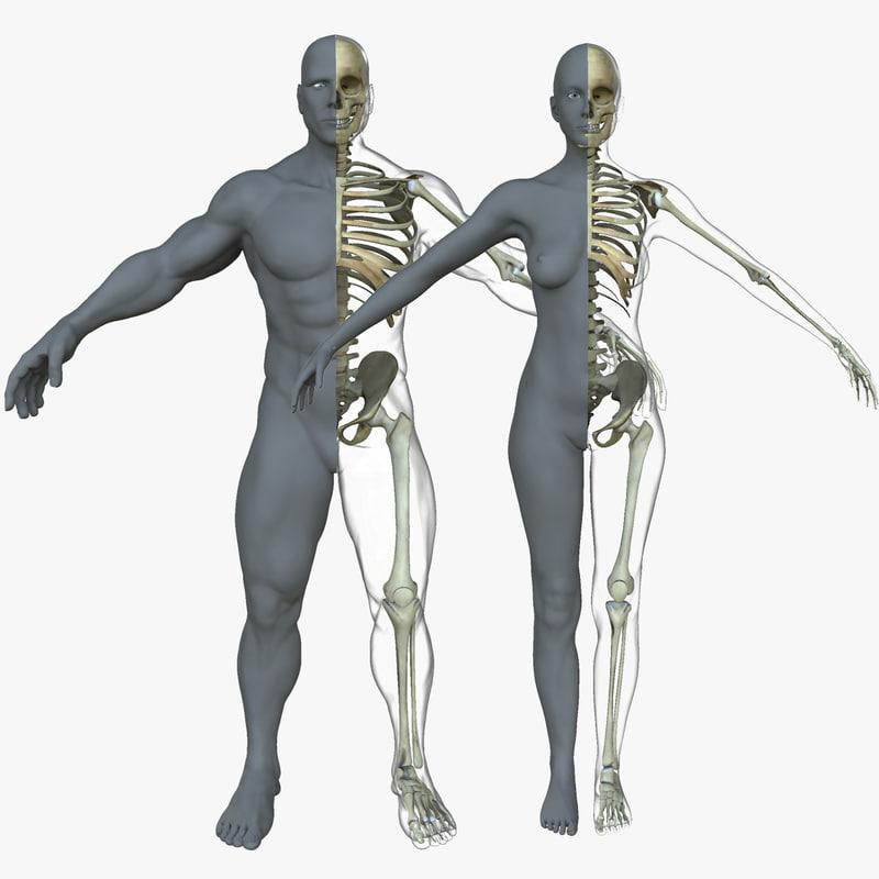 Male Female Skeleton Skin 3d Model