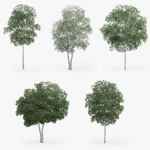3d silver birch trees