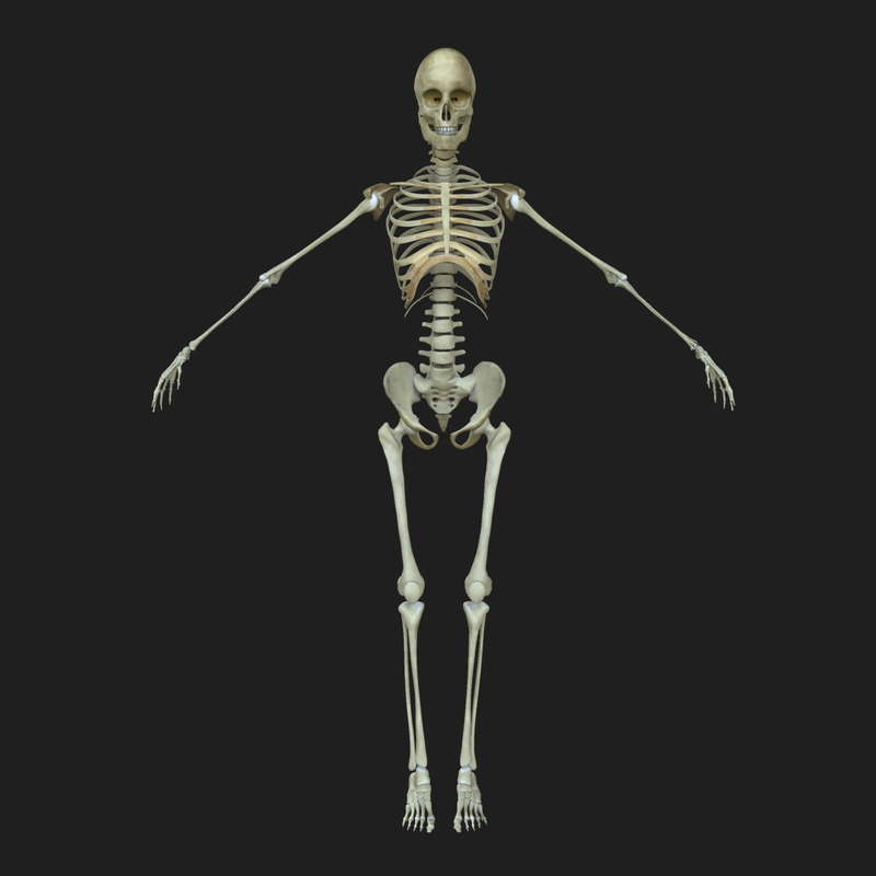 Female Human Skeleton Bone