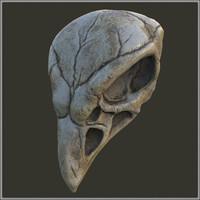 bird skull obj