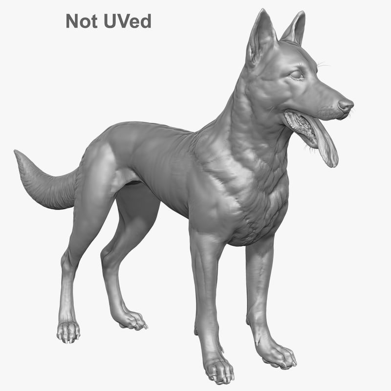 belgian malinois shepherd dog 3d model