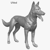 3d obj belgian malinois shepherd dog