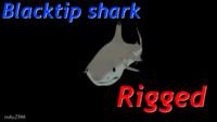 blacktip shark animation blend