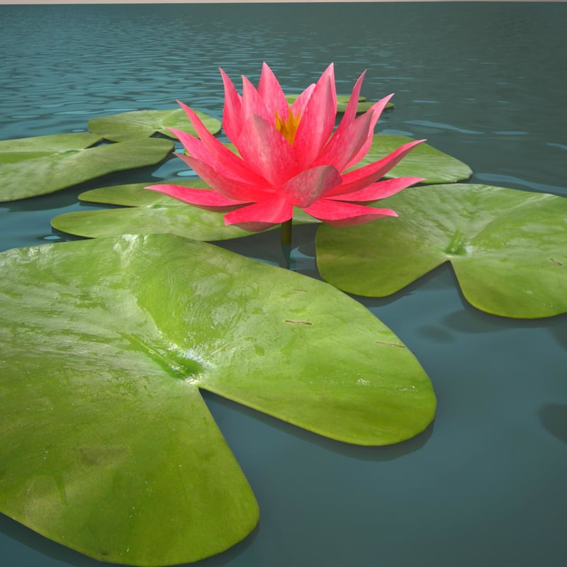 3ds max lily water