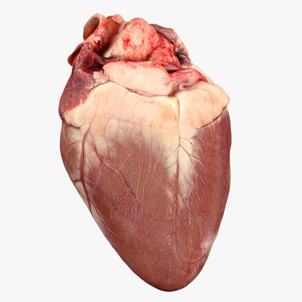 3d heart animation model