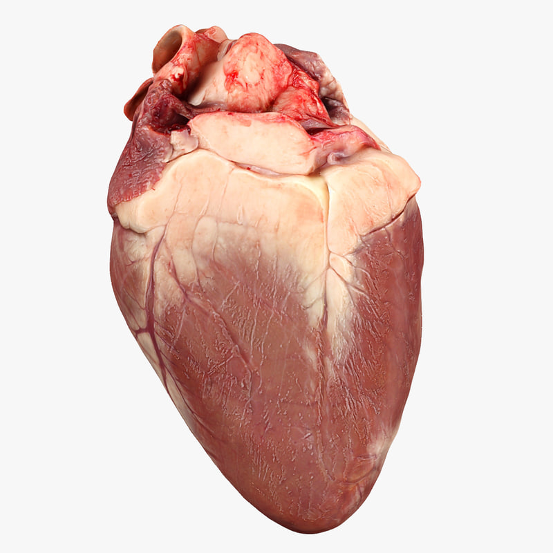 3d heart animation model