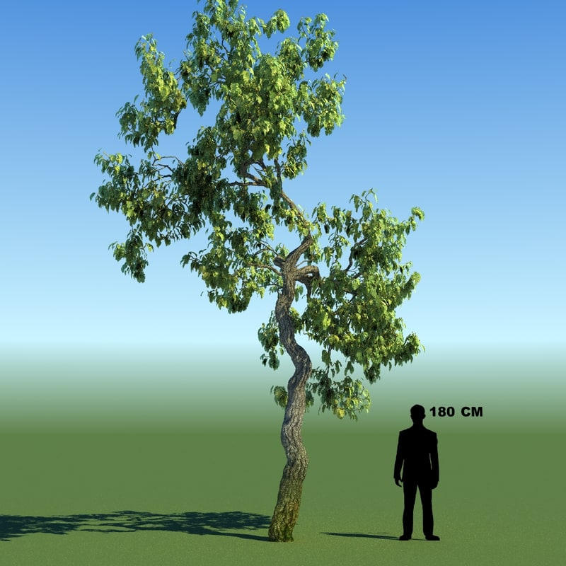 3ds max leaf season tree