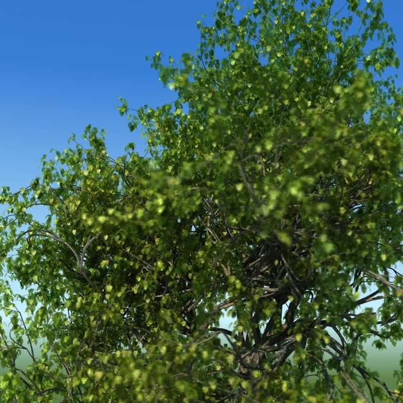 3d model leaf season tree