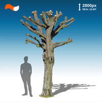 Cut Out Tree S 3