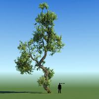 Braodleaf Tree Custom Seasons 12