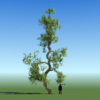 leaf season tree 3d x