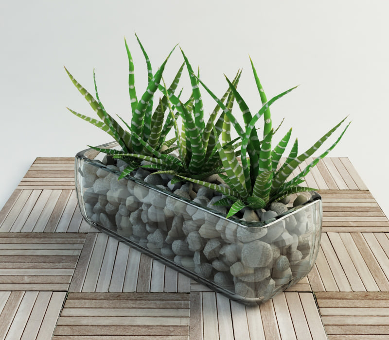 succulent haworthia glass vase 3d model