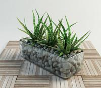 succulent haworthia glass vase 3d model